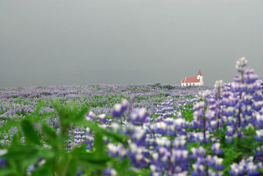 Kirche in Blumenfeld auf Island bei Nebel