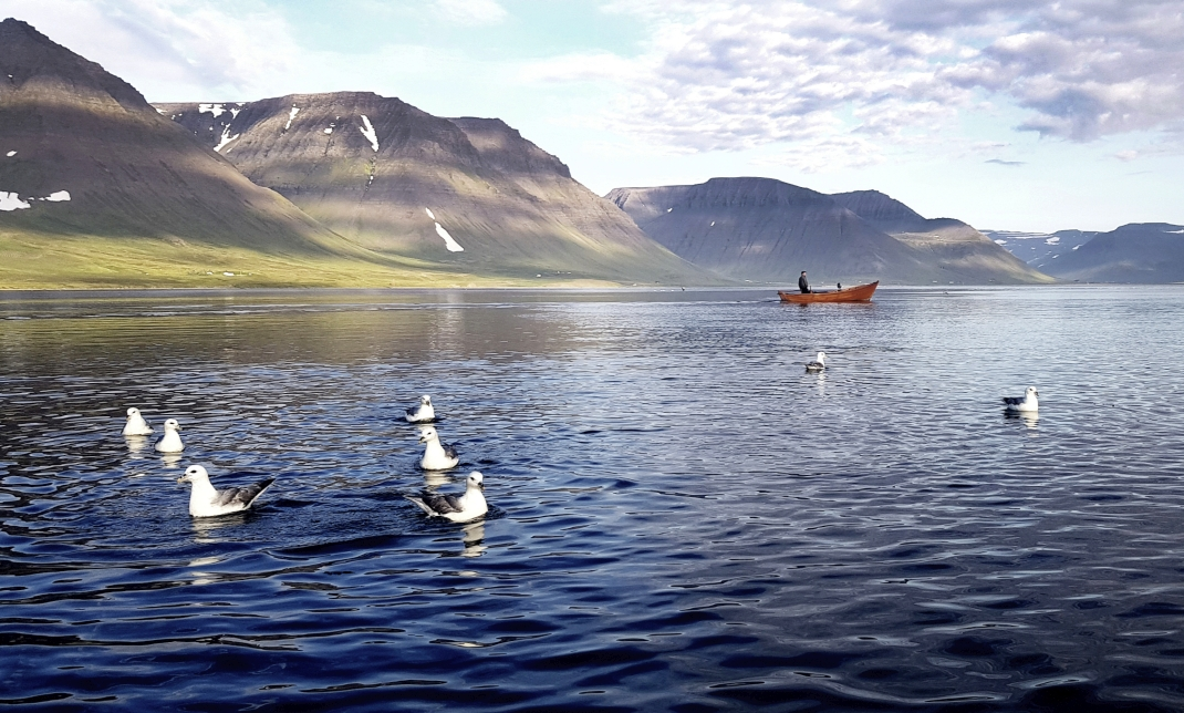 Einsames Fischerboot im Fjord in Island, Fotowettbewerb Platz 3