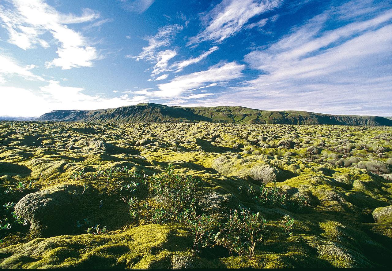 Island, Suedisland, Nahe Kirkjubaerjarklaustur, Moos, Moosteppich, gruen, Landschaft, Natur