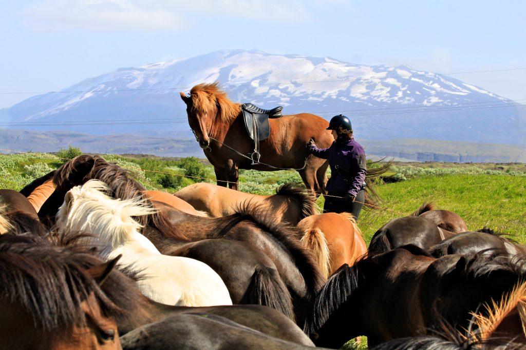 Pferd vor dem Gletscher