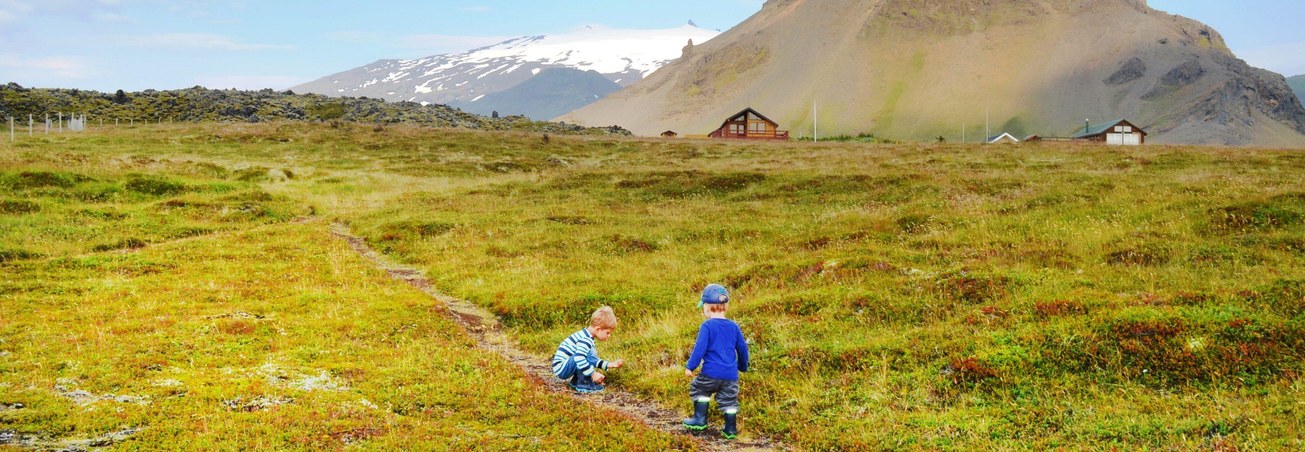 Kinder suchen Blaubeeren