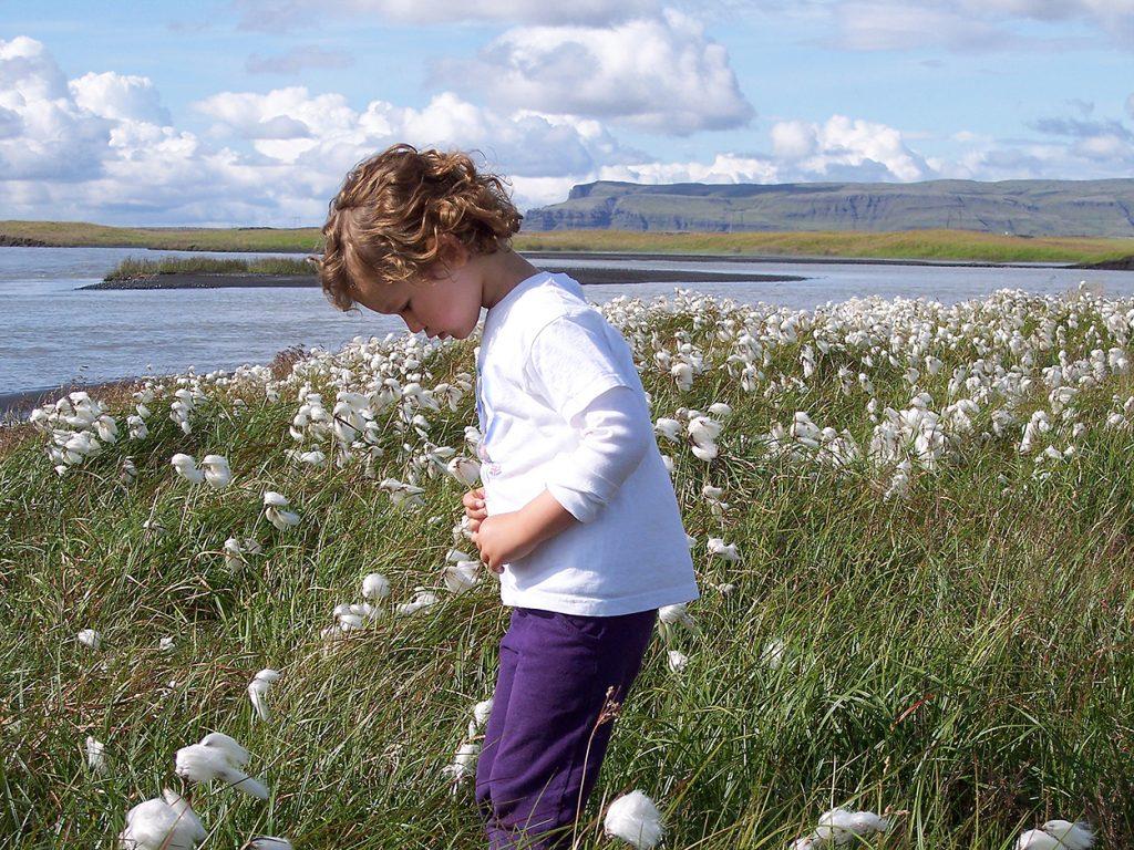 Kind auf Blumenwiese in Island