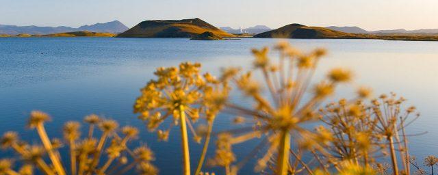 Island, Nordisland, Myvatn, See, Pseudokrater, Herbst,
