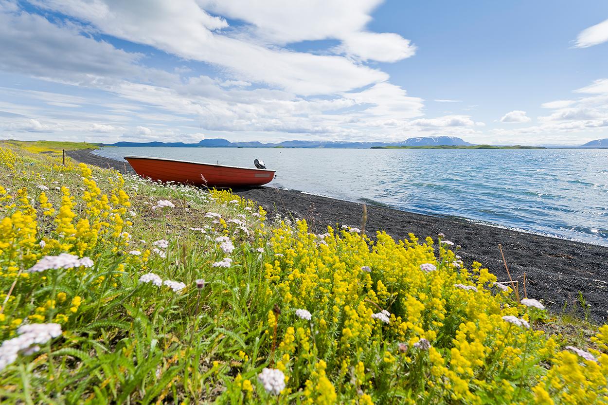 Island, Nordisland, Myvatn, See, Boot, Blumen, Blueten, Landschaft, Natur, WerbungPR, 7/2014