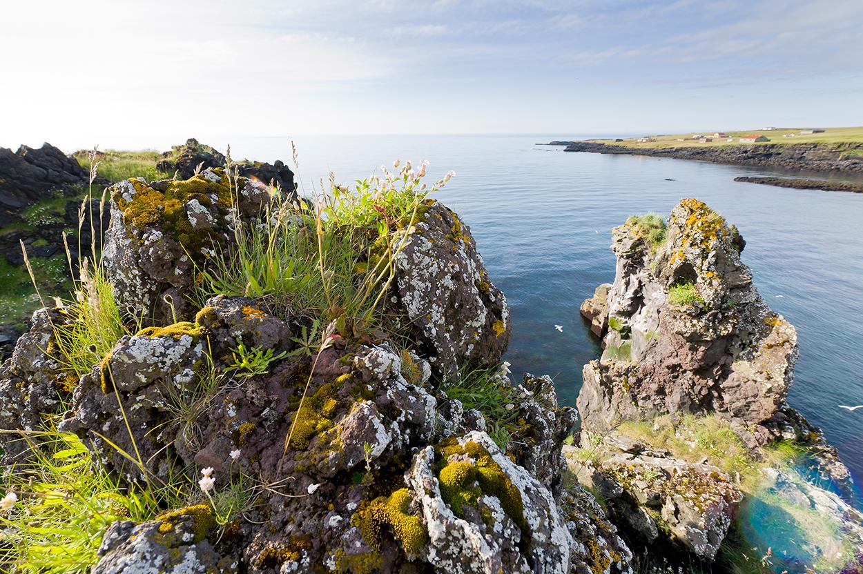 Bewachsendes Lavagestein auf der Snaefellsness Halbinsel in Westisland