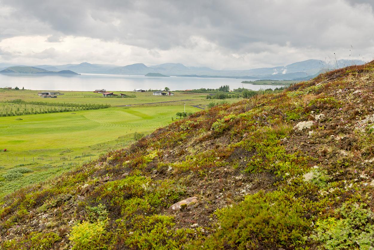 Grüne Felder und Häuser an isländischer Bucht