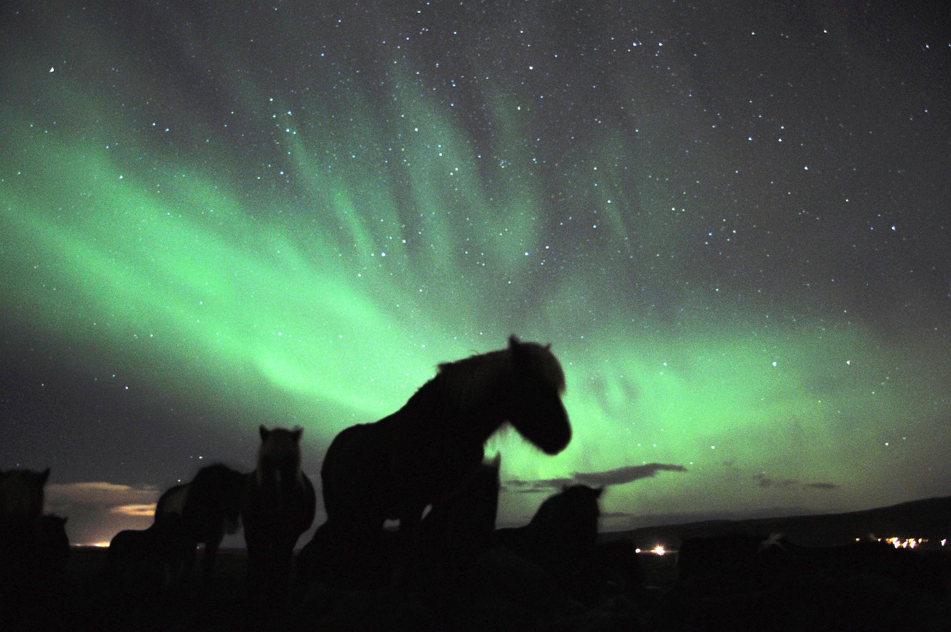 Nordlichter über den Islandpferden am Hotel Eldhestar