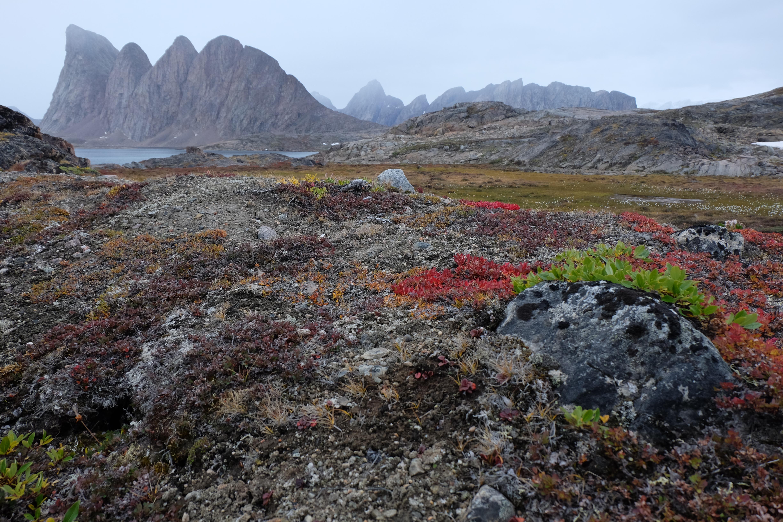 Herbstfarben und Berge der Bäreninsel in Grönland, Scoresbysund