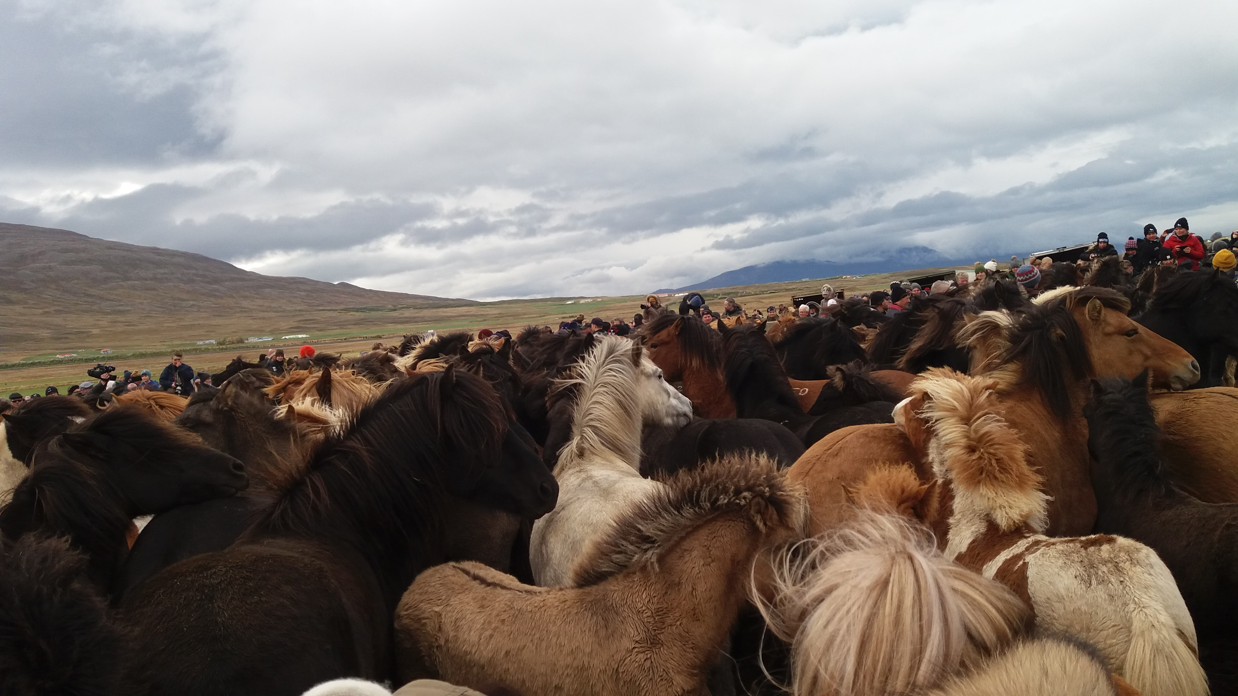 island-reiten-pferde
