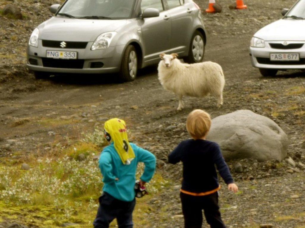 Island mit Kindern an einer Straße mit Schafen