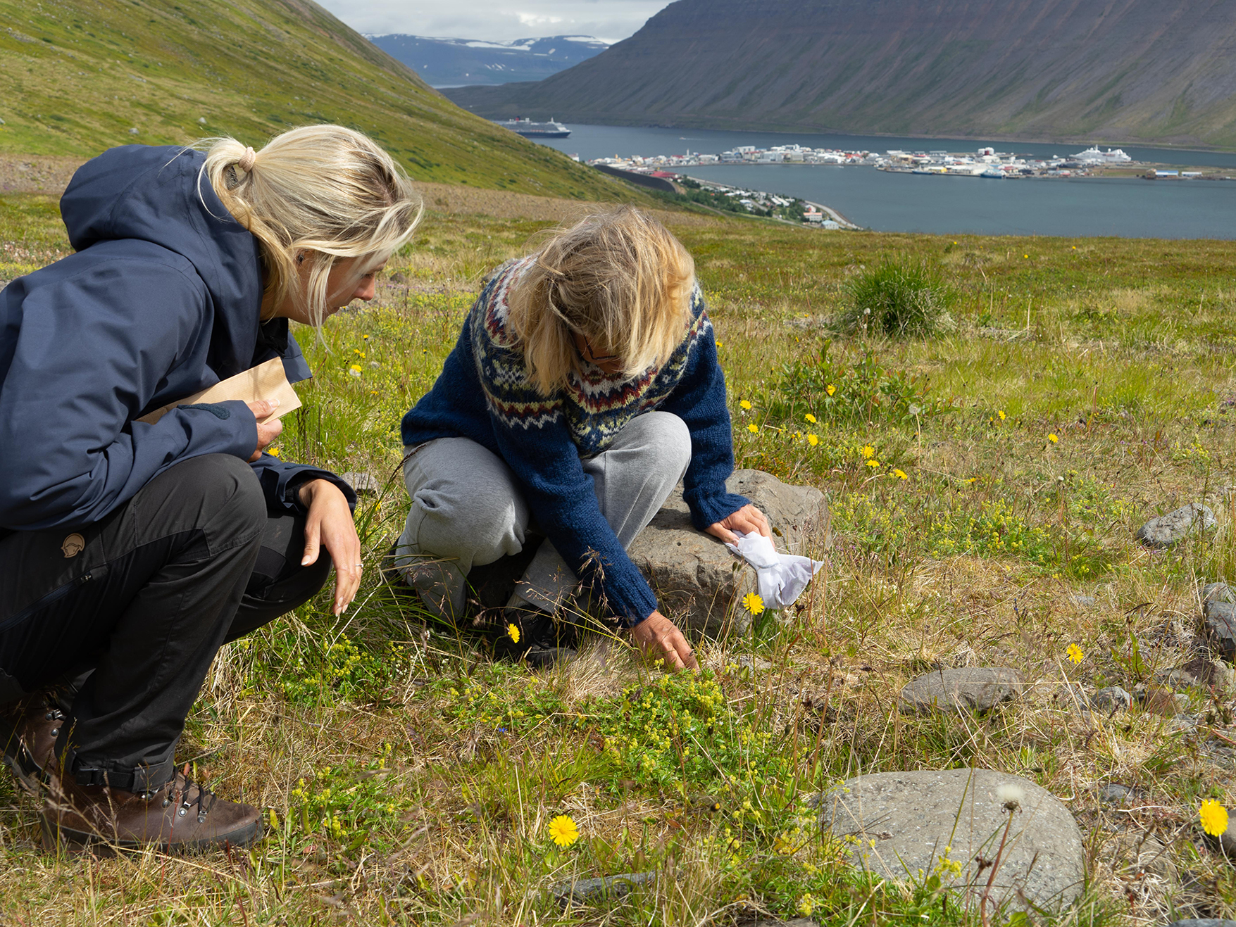 Guide erklärt die Fauna in Island