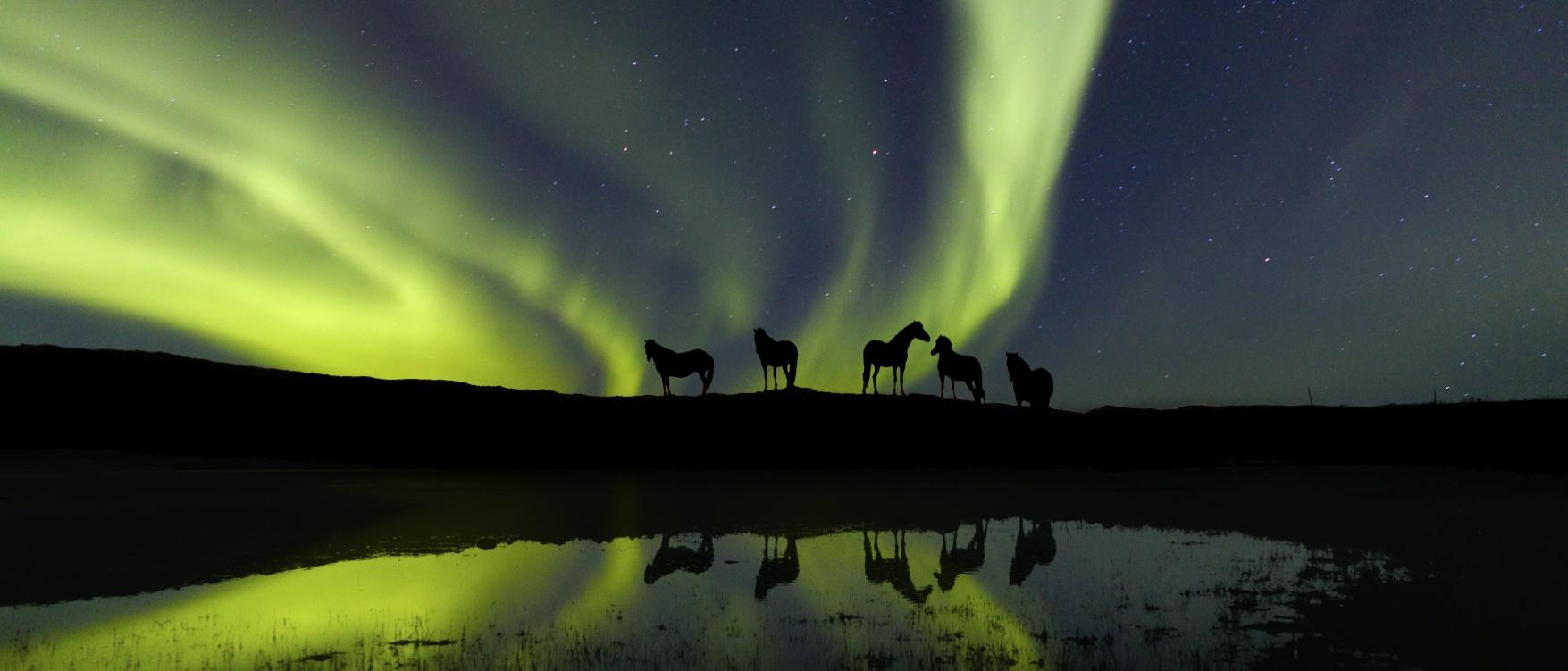Islandpferde unter Nordlichtern