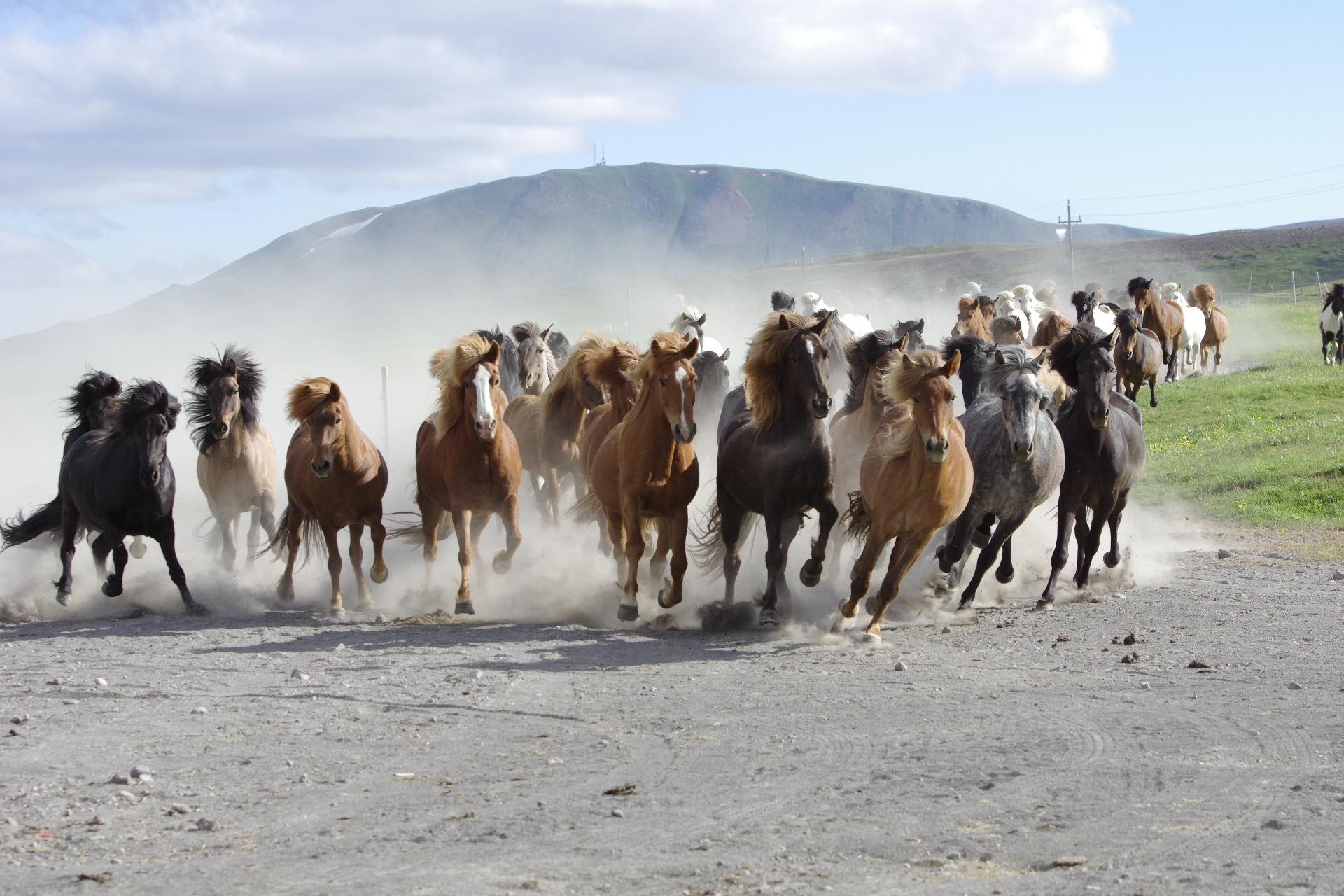 reiten-island-pferde