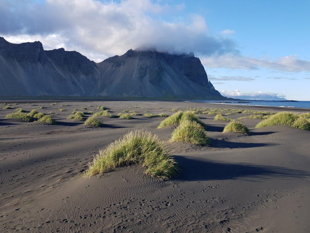Strand bei Skokknes in Südostisland, Grasbüschel im Sand