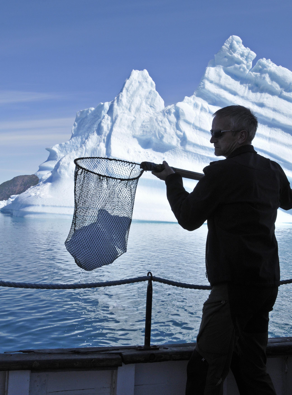 Mann holt mit dem Netz Eisbrocken aus dem Meer während einer Bootsfahrt zwischen Eisbergen im Qoroq Eisfjörd