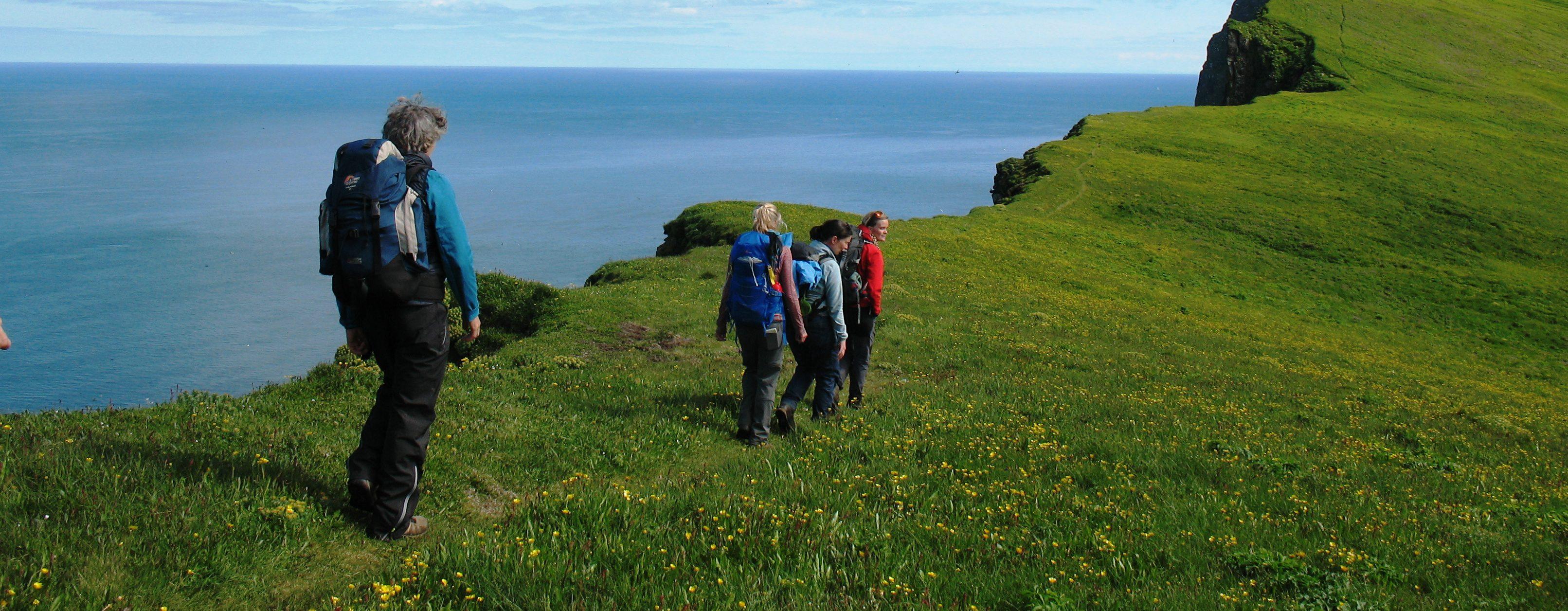 Wanderer vor einem markanten Berg im Naturreservat Hornstrandir, satt grüne Wiesen